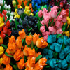 Click here to play Amsterdam Tulips