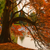 Autumn Pond Tree Jigsaw