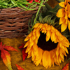 Autumn Sunflower Jigsaw