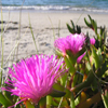 Beach Flowers Jigsaw