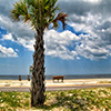 Click here to play Beach Tree