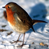 Bird In Snow Jigsaw