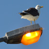 Click here to play Bird Light