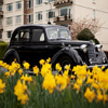 Click here to play Black Vintage Car