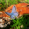 Click here to play Blue Butterfly