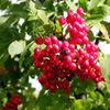 Bright Berries