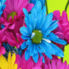 Bright Flowers Jigsaw