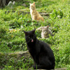Cats Trio Jigsaw