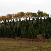 Christmas Tree Farm Jigsaw