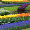 Colorful Garden Jigsaw