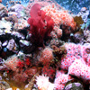 Coral Reef Jigsaw