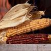 Corn Cobs Jigsaw