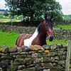 Curious Horse Jigsaw