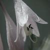 Flowerbell Jigsaw