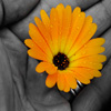 Flower in Hand Jigsaw