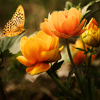 Flowers And Butterfly Jigsaw