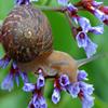 Flower Snail Jigsaw