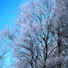 Frosty Tree Jigsaw