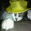 Hat Cat Jigsaw