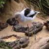 Heron Jigsaw