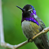Click here to play Hummingbird
