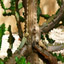 Click here to play Iguana Tree