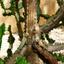 Iguana Tree