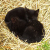 Kittens Sleeping Jigsaw