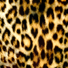 Click here to play Leopard Pattern