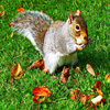 Little Squirrel Jigsaw
