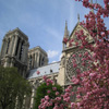 Click here to play Notre Dame Flowers
