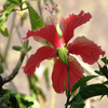 Pale Red Flower Jigsaw