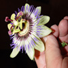 Passion Flower Jigsaw