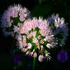 Pinky Flowers Jigsaw