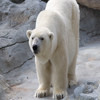 Click here to play Polar Bear