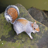 Posing Squirrel Jigsaw
