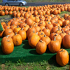Click here to play Pumpkin Market