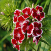 Red Flowers Jigsaw
