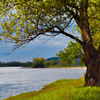 Riverbank Tree Jigsaw