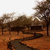 Safari Camp Jigsaw