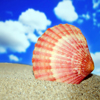 Click here to play Seashell