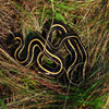 Snake In The Grass Jigsaw