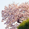 Click here to play Spring Tree 2