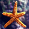 Star Fish Jigsaw