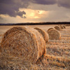 Straw In The Field Jigsaw