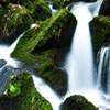 Stream And Moss Jigsaw
