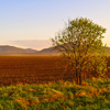 Sunset Field Jigsaw