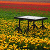 Table In Tulip Field Jigsaw