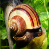 The Snail Jigsaw