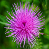 Click here to play Thistle